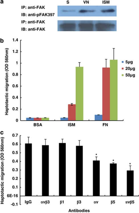 Immobilized ISM activates FAK and promotes EC haptotactic migration. ( a ) Immobilized ISM activates FAK Y397 phosphorylation in similar fashion as immobilized VN. S, cells in suspension. ( b ) ISM dose-dependently promotes EC haptotactic migration with similar potency as FN. ( c ) ISM promotes EC haptotactic migration through α v β 5 integrin