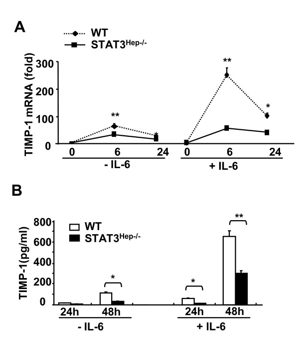 IL-6 induction of TIMP-1 in primary hepatocytes is mediated via a STAT3-dependent mechanism . A , Hepatocytes (2 × 10 5 cells/per well) from wide-type or STAT3 Hep-/- mice were cultured in 6-well plates and incubated with or without IL-6 (50 ng/ml) for 6 and 24 h, followed by real-time PCR analysis of TIMP-1 mRNA, B , or cultured for 24 and 48 h, followed by collection of the supernatants for measurement of TIMP-1 protein. Values are means ± SE from 4 independent experiments. * P