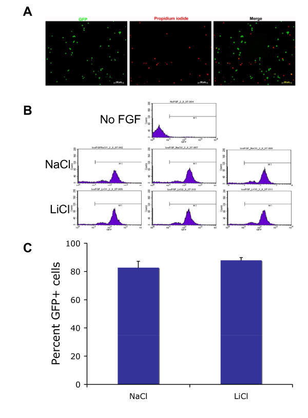 Lithium had no significant effect on percentage of GFP expressing live cells in RG3.6 cell cultures . (A) GFP-expressing cells are negative for propidium iodide (PI) staining. RG3.6 neurospheres were dissociated by trypsinization. The dissociated cells were stained with PI, a red fluorescent nuclear dye that specifically stain dead cells. The green GFP signal and the red PI staining were visualized and photographed using fluorescent microscope. (B) RG3.6 cells treated with NaCl or LiCl had similar GFP histograms. Flow cytometry analysis was performed on RG3.6 cell cultures treated with 3 mM NaCl or 3 mM LiCl for 3 days. Cells grown in non-FGF2 containing medium for 6 days were used as a negative control to gate GFP signal, since most cells grown in this condition were dead. (C) Quantification of the data shown in B. Lithium treatment had no significant effect on the percentage of GFP-expressing live cells in RG3.6 cell cultures.