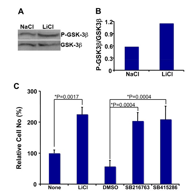 Lithium inhibited GSK-3β in RG3.6 cells, and other GSK3β inhibitors mimicked lithium's effect on RG3.6 cell growth . (A) RG3.6 cells were grown in culture medium containing 3 mM LiCl or 3 mM control NaCl for 3 days, followed by western blotting analysis on P-GSK-3β (Ser9) and GSK-3β expression. (B) The blotting results in A were analyzed using ImageJ software ( http://rsb.info.nih.gov/ij/ , 1997-2007), and the ratio of P-GSK-3β was plotted. (C) Other GSK-3β inhibitors, like lithium, also increased cell numbers in RG3.6 cell cultures. Cell count analysis was performed on RG3.6 cells grown for 6 days in culture medium without or with 3 mM LiCl, 0.1% DMSO, 5 μM SB216763, or 25 μM SB415286 (n = 6 for each condition). DMSO was used as the vehicle control for SB216763 and SB415286, since these two drugs were dissolved in DMSO. The data represent mean ± standard error, and significance was determined with Bonferroni/Dunn post hoc analysis following ANOVA.