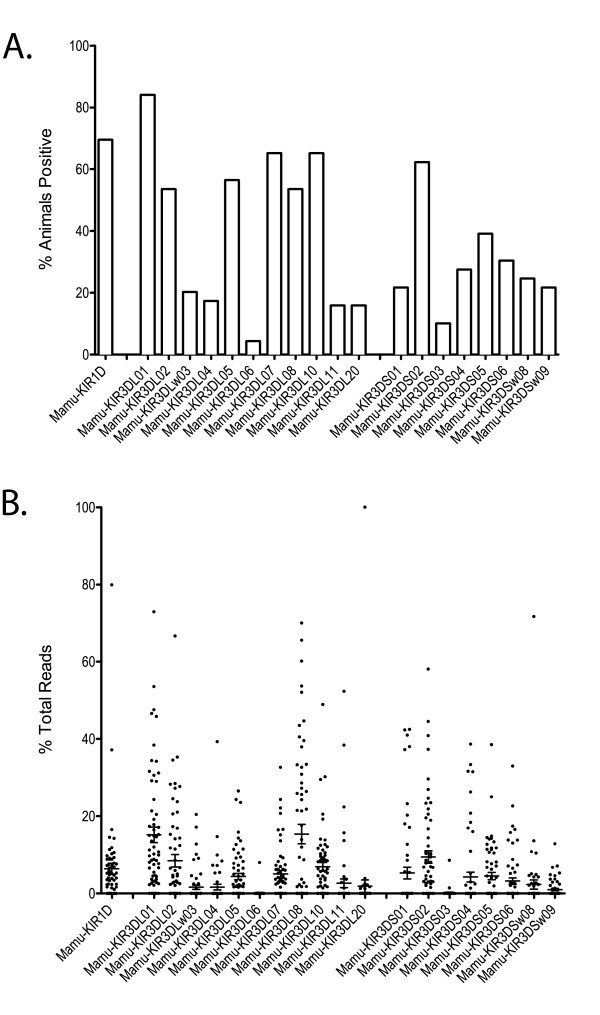 Frequency and relative expression of KIR genes in the rhesus macaque cohort . A) Y-axis indicates the percentage of animals within the cohort (n = 69) that express the indicated KIR gene. Genes not listed were not present in any animal within our cohort. Mamu-KIR2DL04 was excluded since it is not amplified by our <t>pyrosequencing</t> <t>amplicon.</t> B) Graph illustrates the percent of total pyrosequencing reads per animal (n = 61) for each KIR gene. Averages and SEM are represented by error bars. Each animal included had at least 100 sequencing reads. Genotyping results representing less than 1% of total reads in an animal were excluded to mitigate the influence of PCR artifacts. Ambiguous reads matching more than one KIR gene and splice variants were also excluded.