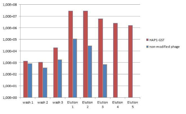 Elution profile for the bacteriophage HAP1 modified with GST tag and purified on glutathione Sepharose compared to a non-modified phage . wash 1 - phage concentration in the washing flow-through (1 st litre of washing buffer) wash 2 - phage concentration in the washing flow-through (2 nd litre of washing buffer) wash 3 - phage concentration in the final washing fraction (3 rd litre of washing buffer) elution 1 - phage concentration in the first elution fraction elution 2 - phage concentration in the second elution fraction elution 3 - phage concentration in the third elution fraction elution 4 - phage concentration in the fourth elution fraction (modified phage only) elution 5 - phage concentration in the fifth elution fraction (modified phage only)
