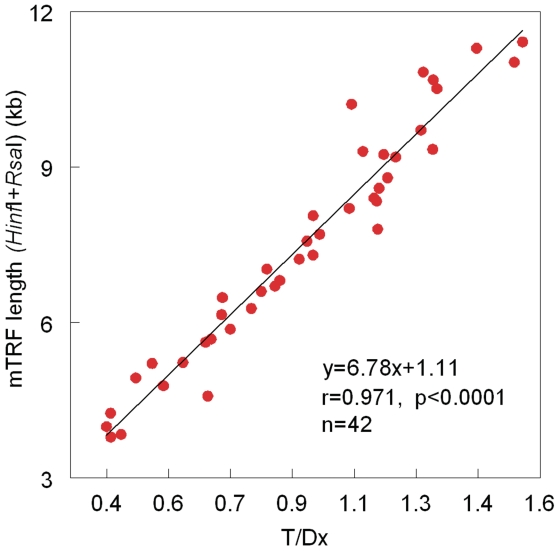 Relationship between mean telomere length, measured by Southern blots of the TRFs, generated by Hinf I/ Rsa I, versus the ratio of T (telomere amount)/Dx (DNA amount), measured by dot blots. Data displayed in the figure are a composite of data displayed in Figure 2 plus an additional set of measurements in leukocytes from newborns and exceptionally old persons.
