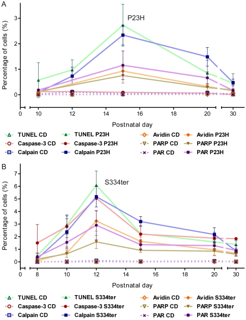 Progression of metabolic cell death markers during 1st postnatal month. Percentage of labelled ONL cells in ( A ) P23H and ( B ) S334ter transgenic rats. While in both RP animal models, most markers analysed peaked together with cell death as evidenced by the TUNEL assay, activation of caspase-3 was absent in P23H retina but present in S334ter retina. In both mutants, calpain activity showed a delayed regression after the peak of cell death. Values are mean ± SD from at least three different animals. All mean ± SD and P values are consigned in the table S1 .
