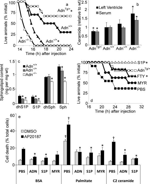 Adiponectin promotes cardiomyocyte and Heart ATTAC survival ( a ) Female heart ATTAC transgenic mice crossed into indicated adiponectin backgrounds were challenged with AP20187 (0.010 μg/kg, IP) and survival was recorded as a Kaplan-Meier plot (n=12/group). ( b ) Ceramide was quantified from left ventricle or serum and normalized to the average content from adiponectin wildtype mice (63.9 pmol/mg in left ventricle, 9.5 pmol/μL in serum) (n=12/group). ( c ) Sphingosine, dihyrosphingosine, S1P, and dihydroS1P were quantified in left ventricle of WT (+/+), adiponectin (−/+), and adiponectin null mice (n=6/group). ( d ) Male HEART-ATTAC mice were treated with myriocin (0.3 mg/kg, IP), FTY720 (1 mg/kg, IP), S1P (1mg/kg, IP) or PBS immediately prior to injection with AP20187 (0.05 μg/kg, IP) and survival was recorded as a Kaplan-Meier plot (n=10/group). Additionally, treating HEART-ATTAC mice with S1P (1mg/kg, IP) just prior to AP20187 treatment prevented death in 100% of the animals tested (n=15) ( e ) Primary cardiomyocytes were isolated from heart ATTAC transgenic pups. After 72 hours of maintenance, cells were washed and treated with 2% BSA conjugated with: C2-ceramide (10 μM), myriocin (10 μM), palmitate (375 μM), or palmitate plus myriocin. PBS, adiponectin (3 μg/mL), or S1P (1 μM) were immediately added. Apoptosis was initiated by the addition of AP20187 (6.25 ng/mL), and viability was determined after 16 hours (n=6/group from 3 separate experiments). * denotes significant (p