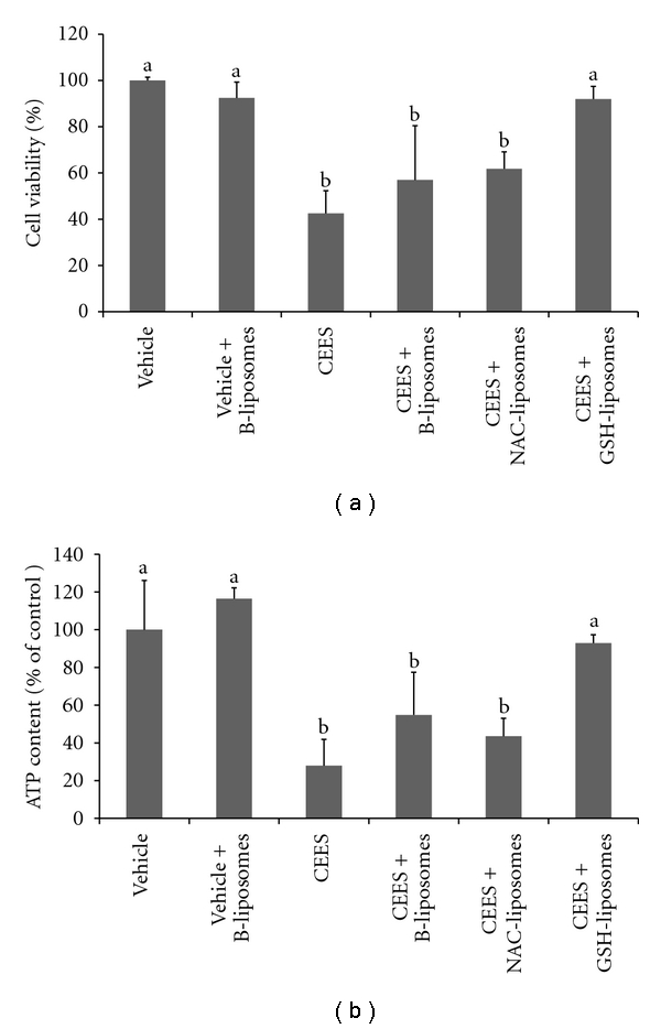 """Protective effects of antioxidant liposomes in the EpiDerm model . EpiDerm tissues were exposed topically to 2.5 mM <t>CEES</t> or vehicle (1% DMSO) in the absence or presence of Blank liposomes (B-liposomes), NAC-liposomes, and GSH-liposomes (as indicated) applied simultaneously with CEES or vehicle, but into the bottom media; the tissues were incubated at 37°C for 18 hours. Final """"calculated"""" concentration of GSH or NAC was 10 mM (see Section 2 ). Cell viability was monitored by the MTS assay (a). Cellular <t>ATP</t> was assayed in the tissue homogenates by the ATP assay (b). Means not sharing a common letter are significantly different ( P"""