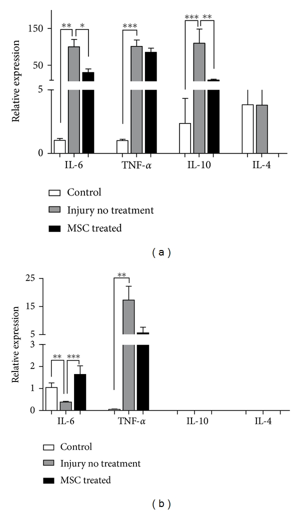 Relative expression of IL-6, TNF- α , IL-10, and IL-4 in acute and chronic models of motor cortex injury. (a) 24 hours and (b) 30 days after injury and MSC injection, RNA was extracted from motor cortex of control, injury without treatment and MSC treated mice. qPCR was performed to quantify the expression of inflammatory cytokines and relative expression was calculated in relation to HPRT. Data are expressed as mean of 2 −ΔΔCt ± SEM (control n = 3, injury no treatment n = 6, MSC treated n = 4). * P
