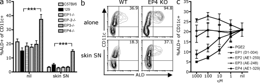 EP-4 deficiency enhances BM-DC RALDH expression. (a and b) BM cells from EP-KO or WT C57BL/6 and 129 mice were cultured with GM-CSF alone or in the presence of skin SN. After 3 d, LPS was added and, 18 h later, cells were stained with CD11c and ALD to measure DC RALDH activity. (a) Bar graph shows the mean percentage of CD11c + DCs that are ALD + for each mouse genotype with SEM pooled from four experiments (***, P