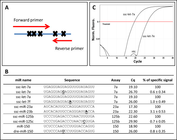 Discrimination between miRNAs with single nucleotide differences . A Position of the single nucleotide mismatches relative to the PCR primers for the ssc-let-7a, ssc-miR-23a, ssc-miR-125b and ssc-miR-150 qPCR assays. The ssc-miR-23b sequence used for mismatch discrimination was taken from miRBase and is different from the ssc-miR-23b sequence found in uterus and used for designing the ssc-miR-23b qPCR primers (Table 1). B Discrimination between closely related miRNA templates for miR-specific qPCR assays with DNA primers. Mismatches in the miRNA compared to the PCR primers are underlined. The data represents the results of three to four measurements. C Amplification curves of ssc-let-7a and ssc-let-7e synthetic template in the ssc-let-7a miR-specific qPCR assays. All samples including the no template control (ntc) contained a final concentration of 0.2 ng/μl salmon sperm DNA.