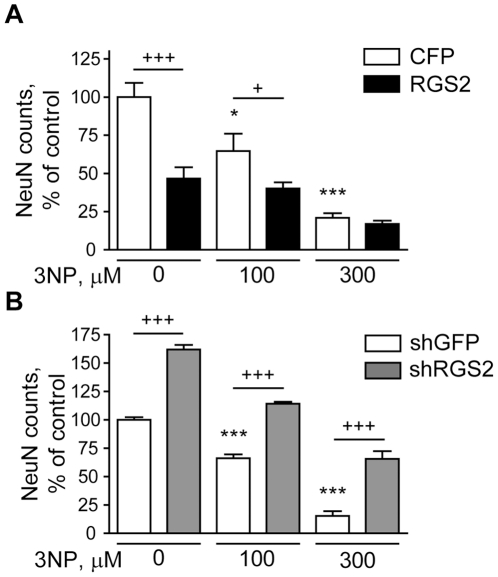 RGS2 levels modulate 3NP toxicity. Primary striatal neurons were infected on DIV 4 with an RGS2 lentiviral expression vector at a concentration of 8 ng/ml p24 (A) or a lentiviral silencing construct targeting RGS2 at concentration of 1 ng/ml p24 (B). Vectors encoding CFP or shGFP were used as controls (in A and B, respectively). After 2 weeks in culture, neurons were treated with 100 or 300 uM 3NP. Neuronal viability was assessed after 48 h by NeuN counting.