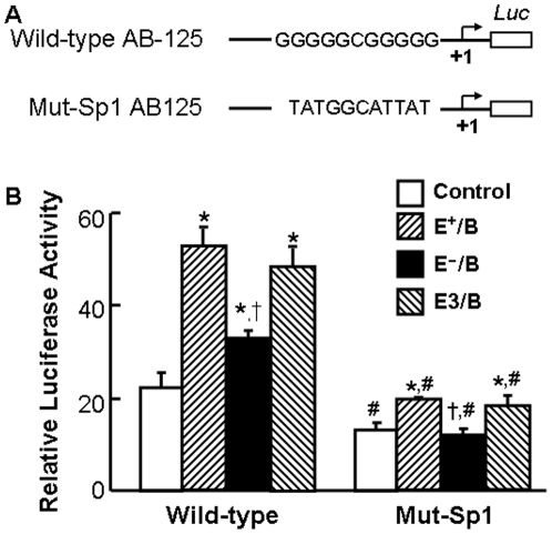 The effect of ApoE on lipoprotein-induced ABCA1 promoter activity. Pane A: Two constructs containing wild-type and Sp1-binding site-mutated (Mut-Sp1) ABCA1 promoter region were subcloned into a luciferase (Luc) reporter plasmid (pGL-2). The mutated sequences in the Mut-Sp1 construct are shown in the schematic diagram. Panel B: Mouse macrophages were transfected with a β-galactosidase expression plasmid and the ABCA1 promoter-reporter constructs or the empty pGL-2 vector. The transfected macrophages were treated with 20 µg/ml of wild-type (E + /B), ApoE-free (EÎ/B) or ApoE3-enriched (E3/B) lipoproteins, or culture medium alone (control) for 4 hrs. Luciferase activity was normalized to the β-galactosidase activity and expressed relative to that of pGL2 basic vector. Values represent the mean ± SEM of five independent experiments. * P