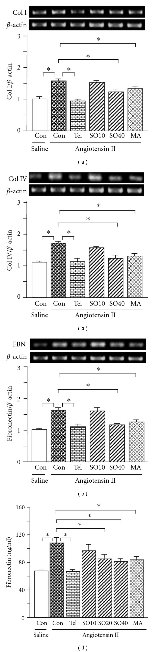 Expression of collagen (Col) I (a), Col IV (b), fibronectin (c) mRNAs and fibronectin protein (d) in rat mesangial cells. SO (SO10: 10; SO20: 20 and SO40: 40 μ g/ml), MA (25 μ M) or telmisartan (Tel. 10 μ M) was added 1 h before mesangial cells were treated with angiotensin II (10 −6 M). Twenty-four hours later total RNA was extracted from the mesangial cells using TRIzol. The relative levels of specific mRNAs were determined by RT-PCR. Results were normalized to β -actin. In a parallel experiment, the medium was collected after mesangial cells were treated with the test agents in combination with angiotensin II. fibronectin protein was determined by commercial ELISA kit according to the manufacturer's instructions. All values are means ± SEM ( n = 3, each group). * P