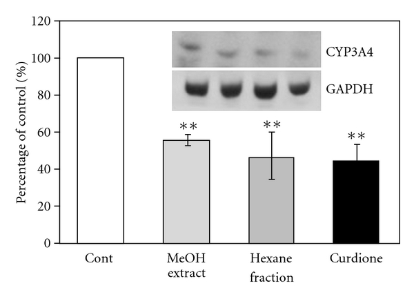 Effects of MeOH extract, hexane fraction and curdione on CYP3A4 protein expression in CHX-treated Caco-2 cells. The western immunoblot band intensities were normalized with that of GAPDH. Results are means ± SD from triplicate experiments. ** P