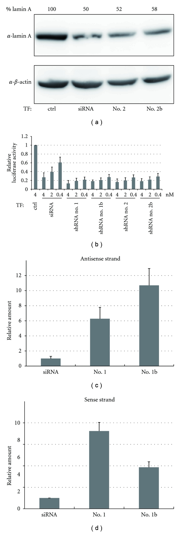 Comparison of the RNAi activity between synthetic shRNAs and their corresponding siRNAs. (a) The RNAi activity of siRNAs and shRNAs was analyzed by immunoblotting. (b) The RNAi activity was monitored by a reporter assay system. The luciferase activity ratio for the control siRNA (ctrl) was set as 1. (c), (d) The incorporation of transfected small RNA into the RISC was analyzed by qRT-PCR. Data were normalized against the amount of miR-21 in the RISC. The amount of siRNA incorporated was set as 1. Each graph point in (b), (c), and (d) represents the average (with s.d.) of three independent experiments.