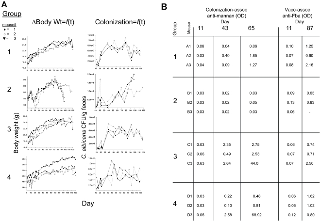 Body mass, GI-tract colonization and appearance of Candida albicans- specific antibodies as a function of time. Mice were given antibiotics in their water prior to and during ingestion of live C.albicans. Changes in body weight were monitored throughout the experiment, as was C. albicans colonization as measured by fungal colony forming units (CFU) per gram weight of feces (Panel A). One group was immunosuppressed (group 2) and all were followed for serum anti-mannan antibody induced as a result of GI-tract colonization. All mice were immunized and appearance of serum antibody against the vaccine immunogen, Fba, indicated whether they responded to the vaccine (Panel B, compare day 11 before vaccination to day 87 after vaccination). Groups 1 and 2 received antibacterial agents and fluconazole, but only group 2 was treated with cyclophosphamide. Group 3 was similar to 1, except that 3 did not receive fluconazole. Group 4 was not pretreated with antimicrobial agents prior to ingesting C. albicans, and this group was not maintained on gentamicin. Antibody responses were measured by ELISA for a 1∶100 dilution of each serum and are expressed as OD 490nm. Shown are antibody responses at days 11, 43 and 65 to a mannan fraction (α-mannan), which occurred as a result of GI-tract colonization, and antibody against Fba peptide, which occurred as a result of Fba vaccination (Panel B). In this experiment all mice were vaccinated on day 51 and boosted on days 65 and 79.
