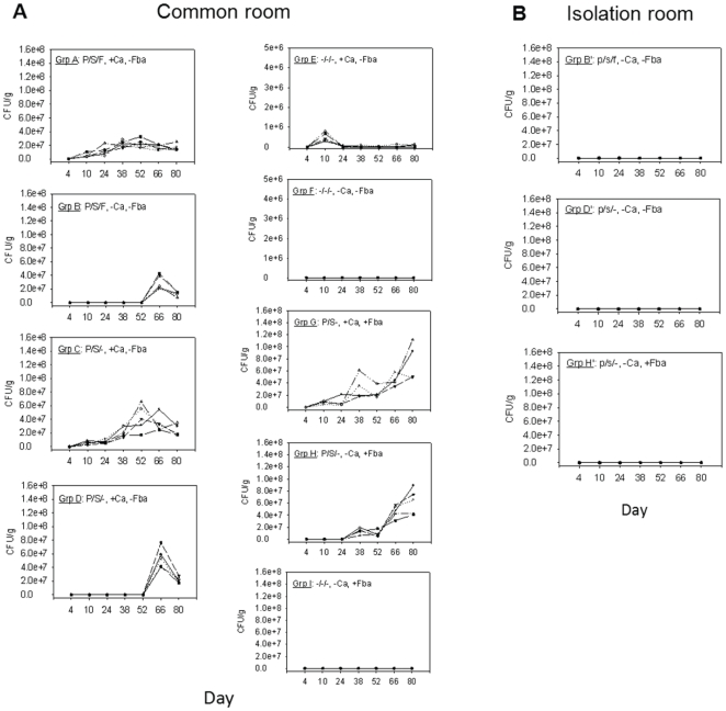 Confirmation of horizontal transmission of C. albicans in mice treated with antibacterial agents. Antimicrobial-treated mice not fed C. albicans (groups B, D and H) housed in a common room (Panel A) with other groups of mice intentionally colonized with the fungus (+Ca), began showing evidence of fungal colonization by day 38 (group H) or after day 52 (groups B and D). Duplicate groups of B, D and H kept in an isolated room (i.e., groups B', D' and H', respectively) did not show evidence of the fungus in their feces (Panel B). p = penicillin; s = streptomycin; f = fluconazole; +Ca = C. albicans in drinking water on days 5–9; +Fba = vaccinated with Fba starting on day 31. The various symbols on the curves represent each animal subject.
