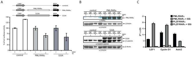 Effect of SSi on PML/RARα-mediated Wnt signaling pathway activation. ( A ) Transactivation assay for Wnt-signaling-related TCF/LEF-dependent transcription. Indicated expression vectors were co-transfected with either Topflash (OT) or Fopflash (OF) (the pGL3-OT promoter contains three TCF/LEF binding sites, whereas pGL3-OF contains mutated inactive binding sites and is a negative control) reporter constructs into 293 cells and exposed them to either 100 µM SSi or 0.02% DMSO. After 48 h, luciferase activity was measured and normalized to co-transfected Renilla activity. ( B ) Western blots for the expression of PML/RARα and S33A using the indicated antibodies, α-β-actin-loading control. ( C ) Effects of SSi on Wnt target genes in X-RARα-positive Sca1 + /lin - HPCs. Results are represented as 2 -ΔΔCT values. Each experiment was performed three times in triplicate, with similar results obtained each time. One representative experiment with SD is shown.