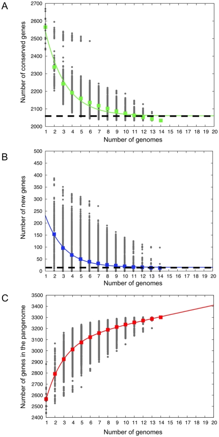 Analysis of pangenome and its components in A. actinomycetemcomitans . Analysis of the size of the core genome (A) and whether the pangenome is open or closed (B and C). The number of common genes (A), new genes (B) and size of pangenome (C) are plotted as a function of the number of n of strains sequentially added. Circles show all different strain combinations for each n . Squares are the averages for each n . The continuous curve in A and B represents the least-squares fit of an exponential decay function. The extrapolated A. actinomycetemcomitans core genome size and average number of new genes are shown as dashed lines in top and middle plots respectively. Based on the curve, the core genome size is estimated to be about 2,060 genes. For every additional strain up to 16 new genes can be added to the open pangenome.