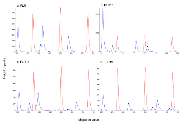 RSCA electropherograms . Examples of RSCA electropherograms from the MegaBace™ 1000 for one individual