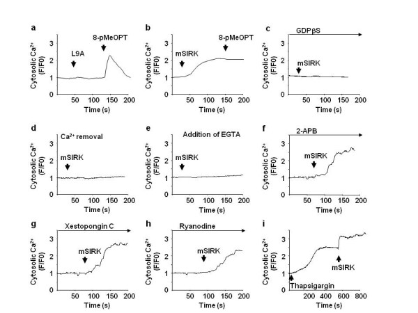 Gβγ induces Ca 2+ influx from the extracellular space . SK-Mel-2 cells were subjected to Ca 2+ signal measurements. a and b) SK-Mel-2 cells were incubated with L9A (20 μM) or mSIRK (20 μM) followed by 8-pMeOPT stimulation (200 μM). mSIRK, but not L9A, increased Ca 2+ signal. 8-pMeOPT failed to show an additional increase of Ca 2+ signal after mSIRK. c, d and e) mSIRK-induced Ca 2+ signal was inhibited by pretreatment with GDPβS (100 μM) for 5 min (c), by Ca 2+ removal from the media (d) or by depletion of Ca 2+ in the extracellular space with EGTA (5 mM) (e). SK-Mel-2 cells were subjected to Ca 2+ signal measurements. f, g and h) Inhibition of IP3 receptors with 2-APB (1 μM) (f) or xestopongin C (1 μM) (g), and blocking of ryanodine receptor with ryanodine (10 μM) (h), did not inhibit mSIRK-induced Ca 2+ elevation. i) mSIRK increases Ca 2+ signal SK-Mel-2 cells after depletion of Ca 2+ in the ER with thapsigargin (2 μM).