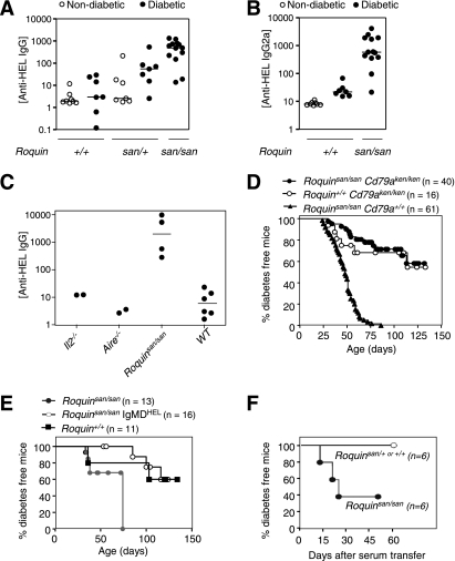 High autoantibodies and requirement for B cells for accelerated progression to diabetes in Roquin san/san TCR+HEL+ mice. A and B : Titers of anti-HEL IgG ( A ) and IgG2a ( B ) in TCR+HEL+ mice of the indicated Roquin genotypes and diabetes status. C : Anti-HEL IgG titers in diabetic TCR+HEL+ mice of the indicated genotypes. D : Diabetes incidence in Roquin san/san TCR+HEL+ mice that were either B cell deficient ( Cd79a ken/ken ; filled circles) or B cell sufficient ( Cd79a +/+ ; triangles) and in Roquin +/+ Cd79a ken/ken TCR+HEL+ mice (open circles). E : Diabetes incidence in Roquin san/san TCR+HEL+ mice with or without an IgMD HEL transgene that prevents isotype switching of HEL-specific B cells, and control TCR+HEL+ mice with normal Roquin and B-cell repertoire. F : Diabetes incidence in Roquin san/+ TCR+HEL+ mice after transfer of a single 200 μL dose of serum from diabetic Roquin san/san TCR+HEL+ mice (closed symbols) or from diabetic Roquin san/+ or Roquin +/+ TCR+HEL+ mice (open symbols).