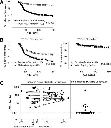 A maternally transmitted epigenetic factor increases diabetes incidence in the TCR+HEL+ offspring of formerly diabetic mothers. A : Diabetes incidence in TCR+HEL+ mice bred from TCR+HEL+ mothers or fathers that had spontaneously developed diabetes and had euglycemia stably restored by transplanting nontransgenic islets. The diabetes-cured TCR+HEL+ parents were bred with nontransgenic partners. Statistical analysis used the log-rank method. B : Diabetes incidence for the cohort described in ( A ) stratified by sex of the offspring. C : For each of 20 diabetes-cured TCR+HEL+ female breeders used to generate the cohort described in ( A ), two serial serum anti-HEL IgG titers (connected by a line) are plotted against the time of blood sampling relative to islet transplantation on day 0 ( left ). Serum anti-HEL IgG titers for 20 nondiabetic TCR+HEL+ females from the same colony as the diabetes-cured females ( right ).
