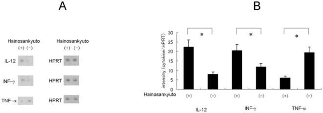 Levels of cytokine mRNA in mouse peritoneal macrophage with Hainosankyuto treatment. Three-week-old ICR mice were force-fed Hainosankyuto for 1 day. Mouse peritoneal macrophage was prepared as a single-cell suspension. Then total RNA was extracted and IL-12, IFN-γ, and TNF-α expression was detected using northern blotting analysis ( Figure 8A ) and quantitative real time RT-PCR ( Figure 8B ), with HPRT as the internal control.