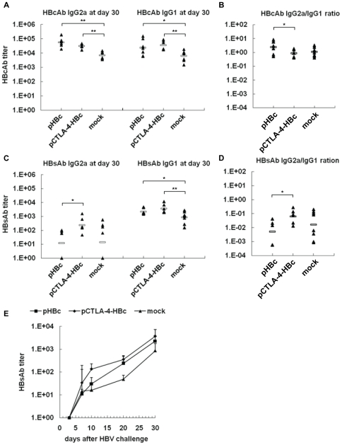 HBcAb and HBsAb responses in mice after HI. At day 30 after HI of pAAV/HBV1.2, the titers of HBcAb and HBsAb IgG2a and IgG1 subtypes in mice sera were determined by ELISA. (A) IgG2a and IgG1 subtypes of HBcAb. (B) The ratios of IgG2a/IgG1 of HBcAb. (C) IgG2a and IgG1 subtypes of HBsAb. (D) The ratios of IgG2a/IgG1 of HBsAb. (E) The kinetics of HBsAb IgG1 response in mice was monitored at days 4, 7, 10, 20, and 30 after HI.