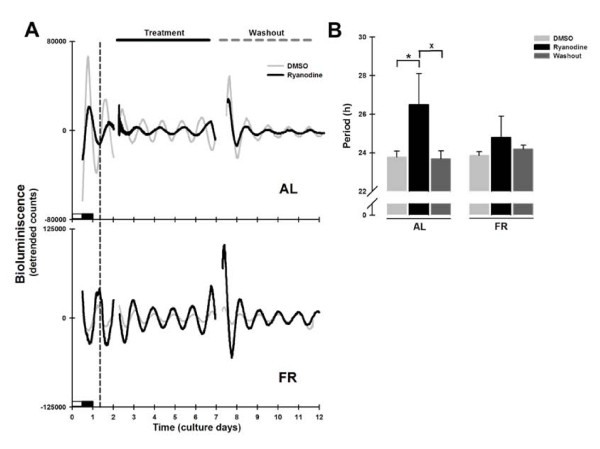 Per1-luc bioluminescence rhythms in liver explants treated with ryanodine . (A) Representative daily records of Per1-luc expression in liver explants from AL (superior panel) and FR (inferior panel) rats during ryanodine treatment (100 μM). The grey trace represents the DMSO control and the black trace the ryanodine treated culture. The vertical dotted line represents the former meal time of the FR rats. The horizontal black line above the upper panel indicates the onset and duration of drug treatment which ended with washout of the drug on day 6, marked by the horizontal grey dashed line. The subjective night (or dark phase) is marked only on the first day of culture. (B) Period of Per1-luc expression in liver cultures from AL (left bars) and FR (right bars) rats during ryanodine treatment and after washout. All data plotted are presented as means ± SEM, n = 6. *Significant difference vs. the DMSO control, and x means difference against washout (Bonferroni post hoc test, α = 0.01).