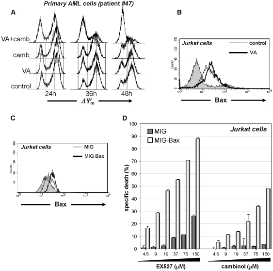 HDAC inhibitor-induced Bax upregulation contributes to the synergy with sirtuin inhibitors. A, 3×10 6 primary AML cells/well were plated in 6-well plates and incubated in the presence or absence of 50 µM cambinol, 100 µg/ml VA, or their combination. ΔΨ m was monitored at the indicated time points by TMRE staining and flow cytometry. B, 1×10 6 Jurkat cells were plated in 6-well plates and incubated for 48 h in the presence or absence of 100 µg/ml VA. Thereafter, intracellular Bax content was determined by flow cytometry. C, D, Jurkat cells were transduced with either pMIG or pMIG-Bax. Infected cells were FACS sorted, allowed to expand, and subsequently used for flow cytometric detection of intracellular Bax (C) and for viability assays (D). For these, pMIG- or pMIG-Bax-transduced Jurkat were plated in 96-well plates and incubated in the presence or absence of EX527 or cambinol at the indicated concentrations. Viability was determined by PI staining and flow cytometry 48 h later. A–C, one representative experiment out of three is presented. D, Results are means ± SD of three separate experiments.