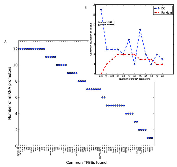 TFBSs shared among the promoter regions of miRNAs up-regulated in DCs . (A) Shown on the x-axis are the high-scoring TFBSs (i.e. of instance score ≥ 6) that occur at least once in the 2 kb promoters of the miRNA up-regulated in DCs. The y-axis shows the number of promoters that have the TFBS at least once at this threshold. (B) The distribution of the number of common TFBS hits per number of common miRNA promoters as in A, for DCs and random sets of miRNA promoters. The values for random are the median values from 1000 randomly chosen sets of 12 miRNA promoters. The score is the ratio of the sum of all TFBS occurrences across all promoters for the DC set relative to that of the random set. The p-value is the fraction of cases wherein this sum for random sets of miRNA promoters is greater than or equal to that of the DC set.