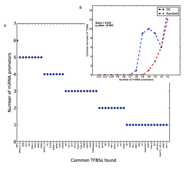 (A) Degree to which conserved TFBSs in promoter regions of miRNAs up-regulated in DCs are shared among their promoters . (B) The distribution of the number of common TFBS hits per number of common miRNA promoters as in A, for test and random sets of miRNA promoters. (A) Degree to which conserved TFBSs in promoter regions of miRNAs up-regulated in DCs are shared among their promoters. Shown on the x-axis are high-scoring TFBSs filtered at a motif instance score threshold of at least 6 and at a 10 th percentile evolutionary conservation score that occur at least once in the promoters of miRNAs up-regulated in DCs. The y-axis shows the number of promoters that have the TFBS at least once at these thresholds. (B) The distribution of the number of common TFBS hits per number of common miRNA promoters as in A, for test and random sets of miRNA promoters. The values for random are the median values from 1000 random sets of miRNA promoters of the same size and length as those in the DC set. The score is the ratio of the sum of all occurrences of conserved TFBS for the DC set relative to that of the random sets. The p-value is estimated from the number of instances wherein this sum for 1000 random sets of miRNA promoters is greater than or equal to that of the DC set.