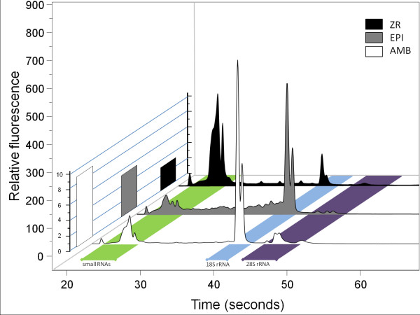100 Gyrodactylus salaris individuals comparison . Electropherograms (Experion) of totalRNA preparations from 100 Gyrodactylus salaris individuals using the AMB, EPI and ZR kits. 1% of each extraction was loaded on a Experion RNA HighSens Chip. The Z-scale illustrates the RQI/RIN values of the respective preparations. The AMB protocol yields high quality RNA whereas the EPI extract contains a substantial proportion of degraded RNA. The ZR extract is of high quality although the RQI/RIN values are low due to the unusual ratio of smallRNA and 18S/28S RNA.