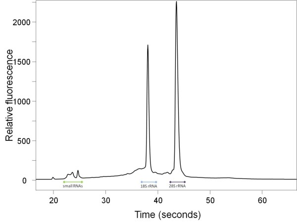Salmo salar RNA . Electropherogram (Experion) of totalRNA extracted from uninfected fish-tissue prepared with AMR. 1% of the extraction was loaded on an Experion RNA HighSens Chip. The ranges of the 18S, 28S, and small RNA species are indicated.