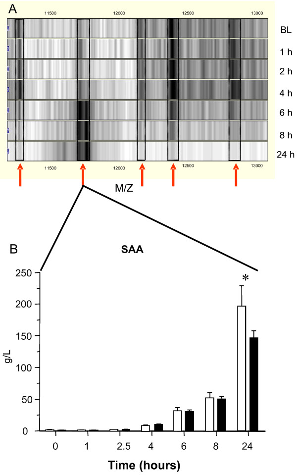 Changes in HDL composition upon LPS challenge. A . Virtual gel-views representing the HDL composition after SELDI-TOF MS analysis. Depicted are profiles from on-chip captured HDL from baseline (BL) to 24 hours after endotoxin challenge. All spectra were normalized on total ion current and baseline corrected and subsequently translated to the