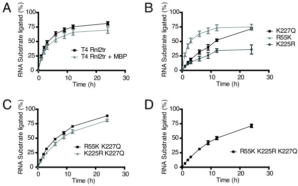 Analysis of intermolecular strand-joining over time . Strand-joining reactions were carried out with 10 pmol 5'-adenylated adapter, 5 pmol 31-mer 5'-FAM-labeled RNA acceptor, and ligase (1 pmol) over a span of 24 hours at 25°C to assess the progress of ligation reactions. Ligation efficiency was determined by resolving the material in the reactions on denaturing 15% acrylamide gels and quantifying the amount of ligation product versus input nucleic acid. Rnl2tr = T4 RNA ligase 2 truncated, Rnl2tr + MBP = T4 RNA ligase 2 truncated attached to an N-terminal maltose binding protein tag. All mutations indicated are substitutions in T4 Rnl2tr + MBP. Data are shown as the mean +/- SEM of at least three independent experiments.