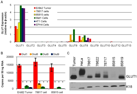 GLUT1 is the most abundantly expressed GLUT family member in MMTV-c-ErbB2 tumors and a number of mouse mammary carcinoma cell lines. A. qPCR analysis to determine the expression of GLUT1–GLUT6, GLUT8–GLUT10, GLUT12–GLUT13 (eleven of the twelve mouse GLUT family transporters) relative to β-actin expression was performed with the cDNA equivalent of 50 ng RNA in six samples: mammary tumor from a MMTV-c-ErbB2 mouse (ErbB2 tumor), two different cell lines derived from these tumors (78617 and 85815), a cell line derived from a MMTV-PyVMT mouse mammary tumor (Met1), a cell line derived from a BALB/c mouse mammary tumor (4T1) and immortalized mouse mammary epithelial cells (EPH4). B. Quantitation of the number of copies of GLUT1, GLUT6, GLUT8 and GLUT9 RNA in the cDNA derived from 50 ng RNA from triplicate samples of ErbB2 Tumors, 78617 cells and 85815 cells. * indicates p