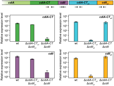 The EC93 orphan region is transcribed. RNA from E. coli EC93, EC93 Δ cdiA-CT EC93 Δ cdiI EC93 , and EC93 Δ cdiA-CT o1 EC93 Δ cdiI o1 EC93 was subjected to quantitative RT-PCR. The primer binding sites within the cdi locus are depicted schematically as arrows. The relative expression levels represent the mean ± SEM for three independently isolated RNA samples.
