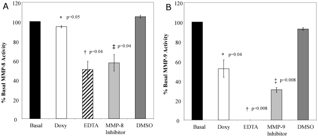 Treatment of ARDS tracheal aspirates with MMP-8 and MMP-9 inhibitors. A. Tracheal aspirates from ARDS subjects (n = 4) with high MMP-8 activity were examined in the presence of different MMP inhibitors. MMP-8 was reduced by 40–50% relative to basal activity when incubated with 5 mM of EDTA ( † p = 0.04 ) and 30 ng/ml of a specific MMP-8 inhibitor ( ‡ p = 0.04 ) versus basal activity and vehicle controls. Incubation with 100 mcg/ml of doxycycline resulted in a 10% decrease in MMP-8 activity compared to basal levels (* p = 0.05 ). B. Tracheal aspirates from ARDS subjects (n = 4) with high MMP-9 activity were examined in the presence of different MMP inhibitors. MMP-9 activity decreased by 70–100% relative to basal activity in the presence of EDTA (5 mM; † p = 0.008 ) and a MMP-9 specific inhibitor (50 ng/ml; ‡ p = 0.008 ). Inhibition with doxycycline (100 mcg/ml) decreased MMP-9 activity by approximately 40% of basal activity (* p = 0.04 ).