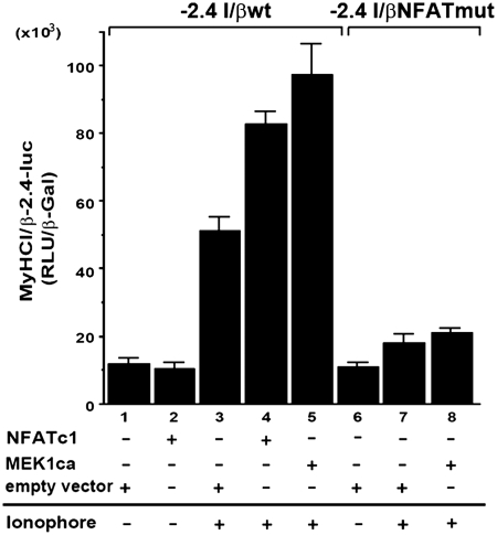 MEK1–ERK1/2 signaling increases Ca 2+ -ionophore-induced NFATc1 transcriptional activity depending on a specific NFAT binding site. C2C12 cells were transiently transfected with a −2.4-kb wild-type MyHCI/β (−2.4 I/βwt) promoter construct or a −2.4-kb MyHCI/β promoter construct mutated in the −439/−432-bp NFAT binding site (−2.4 I/βmut) alone, or were cotransfected with expression vectors for NFATc1, or MEK1ca, or empty vector. Cells were grown for 24 h in GM and then for 2 days in DM with or without Ca 2+ -ionophore A23187 (0.1 µM). The promoter activity is expressed as relative light units per unit β-galactosidase (RLU/β-Gal). The data represent the mean ± SD of triplicate data points.