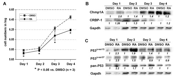 The growth inhibition of PanC-1 cells by ATRA was accompanied by an increase of Chmp1A, CRBP-1, P53 and phospho-P53 protein expression . (A) PanC-1 cells were counted and equal numbers of cells were seeded in 10 cm tissue culture dishes. Next day, cells were treated with DMSO or ATRA. The following 4 days, cells were counted and plotted for the graph. Dashed line with square represents DMSO treated and straight line with circle represents ATRA treated. P value indicates a significant growth inhibition by ATRA treatment. (B, C) The cells were processed for Western blot analysis after lysis. Notice the increase of Chmp1A and CRBP-1, P53 and phospho-P53 upon ATRA treatment.