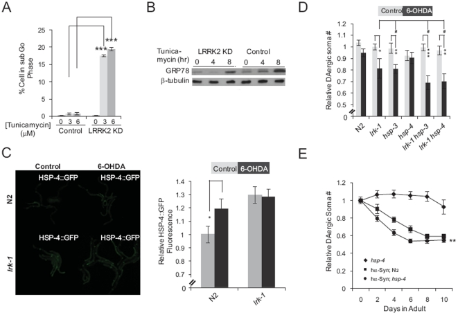 LRRK2 supports <t>GRP78-mediated</t> cell survival. ( A ) Quantification of the populations of cells with sub-G0 DNA content in cultures of SH-SY5Y cells transfected with a control vector (Control) and MIX LRRK2 KD SH-SY5Y cells (LRRK2 KD) treated with 0, 3 or 6 µM tunicamycin for 16 hours. Data represent the mean ± SEM of 3 independent experiments. ***, p