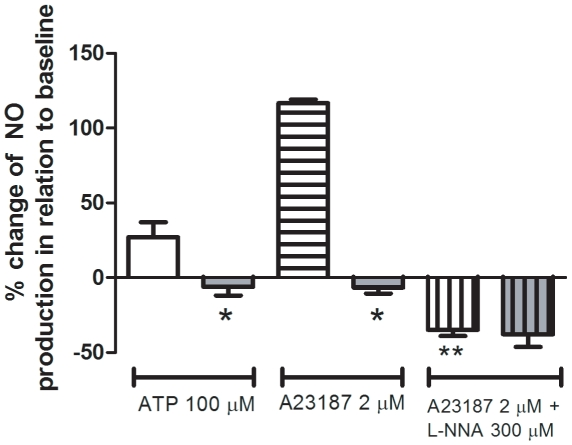 Nitric oxide production in cultured endothelial cells from control and S. mansoni -infected mice. Nitric oxide (NO) production by confluent mesenteric endothelial cells in response to 100 µM ATP and 2 µM A23187 was measured in living cells using the fluorescent probe DAF-FM (2.5 µM) and a microplate fluorometer. Control mice: white bars (open, horizontal and vertical lines). Infected mice: gray bars (open, horizontal and vertical lines). Data are expressed as the mean and S.E.M. of 6–7 experiments performed in triplicate obtained from four different cultures and from different animals (ATP condition) or four replicates of a typical experiment (A23187 condition). Basal NO production observed in the absence of ATP or A23187 was considered as 100%. * P