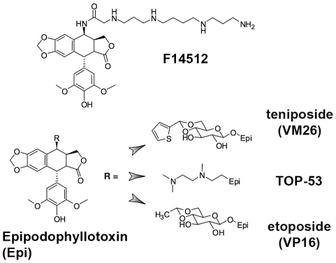 Structure of podophyllotoxin derivatives used in this study. Structure of F14512. Epipodophyllopoxin is shown to the left, with the substitution of different R groups leading to teniposide (VM26), TOP-53 and etoposide (VP16).