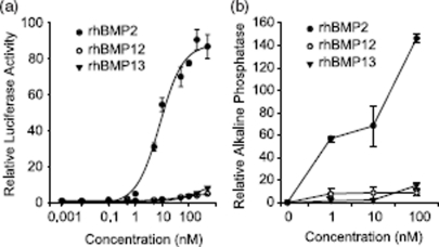 BMP activity in C3H10T1/2 cells. (a) C3H10T1/2 cells infected with BRE-Luc construct were treated with increasing concentration of rhBMP2, rhBMP12, or rhBMP13. (b) ALP activity in C3H10T1/2 cells following 2-day incubation with 0, 1, 10, or 100nM of rhBMP2, rhBMP12, or rhBMP13.