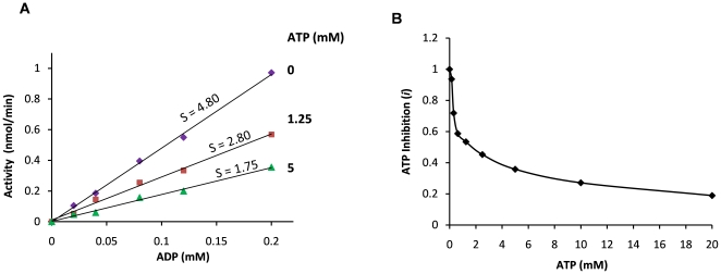 ATP inhibition of CD39L2-catalyzed ADP hydrolysis. A ) Rate constants for CD39L2 in the presence of different concentrations of ATP. The reactions were performed with 0.12 µg of CD39L2 in 50 µL of the kinase assay buffer at room temperature. For clarity, only data at 0, 1.25 and 5 mM of ATP are shown. Slopes (s) of the curves represent the rate constants. Elevated phosphate levels in all reactions due to ATP hydrolysis were regarded as background and were subtracted out. B ) ATP inhibition factor ( i ), the ratio of a rate constant in the presence of ATP to the rate constant in the absence of ATP, is plotted versus ATP concentration.