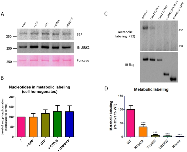 Metabolic labeling of LRRK2 depends on an intact ROC domain. A–B. Influence of guanine nucleotides on phosphorylation of LRRK2 in cellular lysates. HEK293T cells expressing LRRK2 were lysed and incubated with ATP- 32 P for 30 minutes at 30°C without additions (control) or in the presence of 10 µM GDP, GTP or the non hydrolyzable GTP analogues GTPγS and GMPPCP. LRRK2 was subsequently IP purified and submitted to SDS-PAGE and blotting to a PVDF membrane A. Shown here are the representative blot autoradiograms, immunoblot detection and ponceau staining of the phospholabeled samples. B. Quantification of A. C–D. Metabolic labeling of LRRK2 wt, GTP binding deficient LRRK2 mutants (K1347A, T1348N), and LRRK2 C-terminal (972–2527, encompassing ROC domain and lacking most cellular phosphorylation sites) and N-terminal (1–1245, encompassing cellular phosphorylation sites and lacking ROC domain) fragments. C. Representative blot autoradiograms and blot immunodetection of the metabolically labeled samples. D. Quantification of C. Data are representative of 4 experiments. Statistical differences of results in panels B and D were tested by one-way ANOVA as described in the materials and methods section. *** P