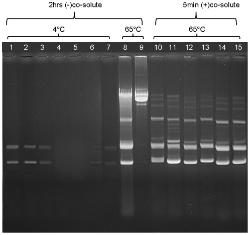 Elevated temperatures and osmolytes increase the efficiency of plasmid DNA extraction by NIDs. Extractions of either pUC19 (lanes 1–8 and 10–15) or pCYPAC3 plasmids (lane 9) were carried out. Transformed DH5α cells were grown in 1.5 ml LB cultures and resuspended in 150 µl 50 mM Tris pH 8, 10 mM EDTA with or without co-solutes. 500 µg/ml lysozyme was also added, and the cells were incubated as specified below. Salt concentrations were adjusted to 0.5 M NaCl in all extracts, except the ones loaded in lanes 10 and 12–15. Extracts were cleared by centrifugation, and precipitated with 150 µl isopropanol. DNA pellets were dissolved in 40 µl TE buffer, 40 µg/ml RNase A. 10 µl aliquots of the solutions containing either the pCYPAC3 (lane 9) or pUC19 plasmids (all other lanes) were loaded on the gel. Exposure times and temperatures of extraction are shown above the lanes. For lanes 1–9, extraction with the indicated NID was done in the absence of co-solutes. For lanes 10–15, the included co-solute is indicated. Lane 1: 0.5% IGEPAL CA-630. Lane 2: 0.5% TX-100. Lane 3: 0.5% IGEPAL CA-720. Lane 4: 0.5% Tween-80. Lane 5: 0.5% Tween-20. Lane 6: 2% IGEPAL CA-720. Lane 7: 4% IGEPAL CA-720. Lane 8: 0.5% Tween 80. Lane 9: 0.5% Tween 80. Lane 10: 0.5% Tween 20/0.5 M KCl. Lane 11: 0.5% Tween 20/22.5% sucrose. Lane 12: 0.5% IGEPAL CA-630/0.5 M NH 4 Cl. Lane 13: 0.5% TX-100/0.5 M NH 4 Cl. Lane 14: 0.5% TX-100/0.5 M NaCl. Lane 15: 0.5% TX-100/0.5 M NaAc.