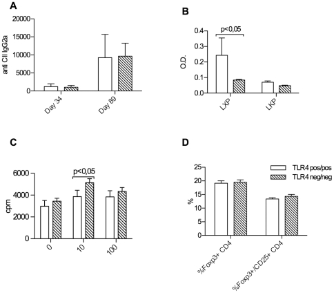 B and T cell responses. No significant difference in peripheral blood anti-collagen type II antibody concentrations of the IgG2a subclass at days 34 and 89 in TLR4 negative versus positive groups of mice (A). Anti-cyclic citrullinted peptide (CCP) antibody concentrations (anti-LXP) are significantly higher in TLR4 positive groups of mice at day 34 after immunization, while anti-non-citrullinated controle peptide antibody concentrations are comparable (B). T cell recall responses in TLR4 negative mice were significantly stronger than in wt mice at the lower tested antigen concentration (C). No influence on foxp3 positive Treg numbers was seen (D).