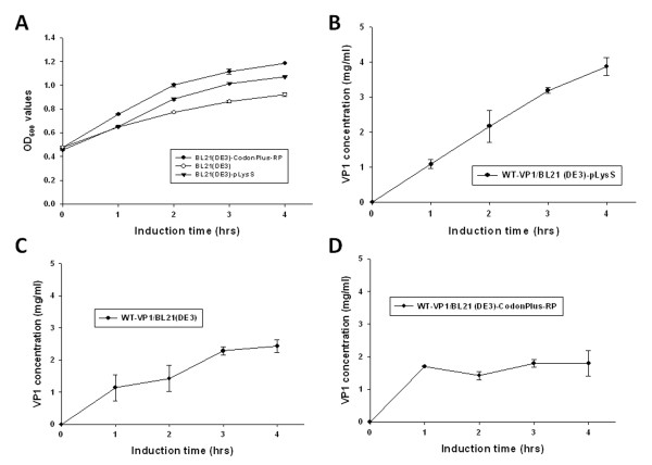 Growth kinetics and production profiles of GST-VP1 protein in three E. coli strains . (A) Growth profile of BL21(DE3), BL21-CodonPlus(DE3)-RP and BL21(DE3)-pLysS in LB medium post-induction. The production profiles of the three E. coli strains, (B)BL21(DE3)-pLysS, (C)BL21(DE3) and (D)BL21-CodonPlus(DE3)-RP containing pGEX-4T-1-VP1 are shown over time course after IPTG induction.